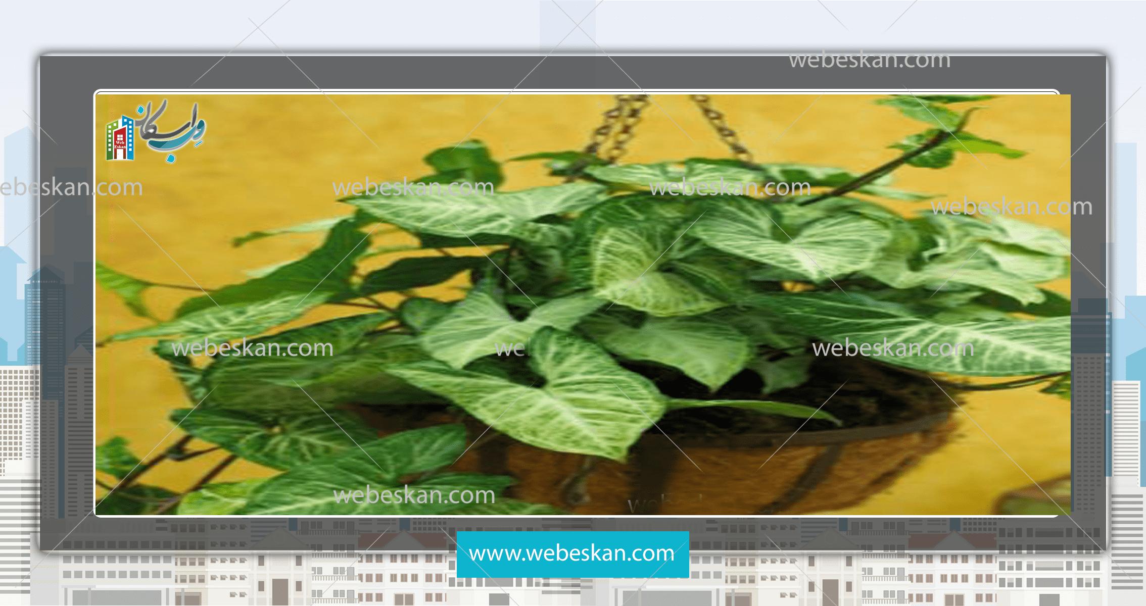 17 گیاه ایده آل برای آویز در خانه شما