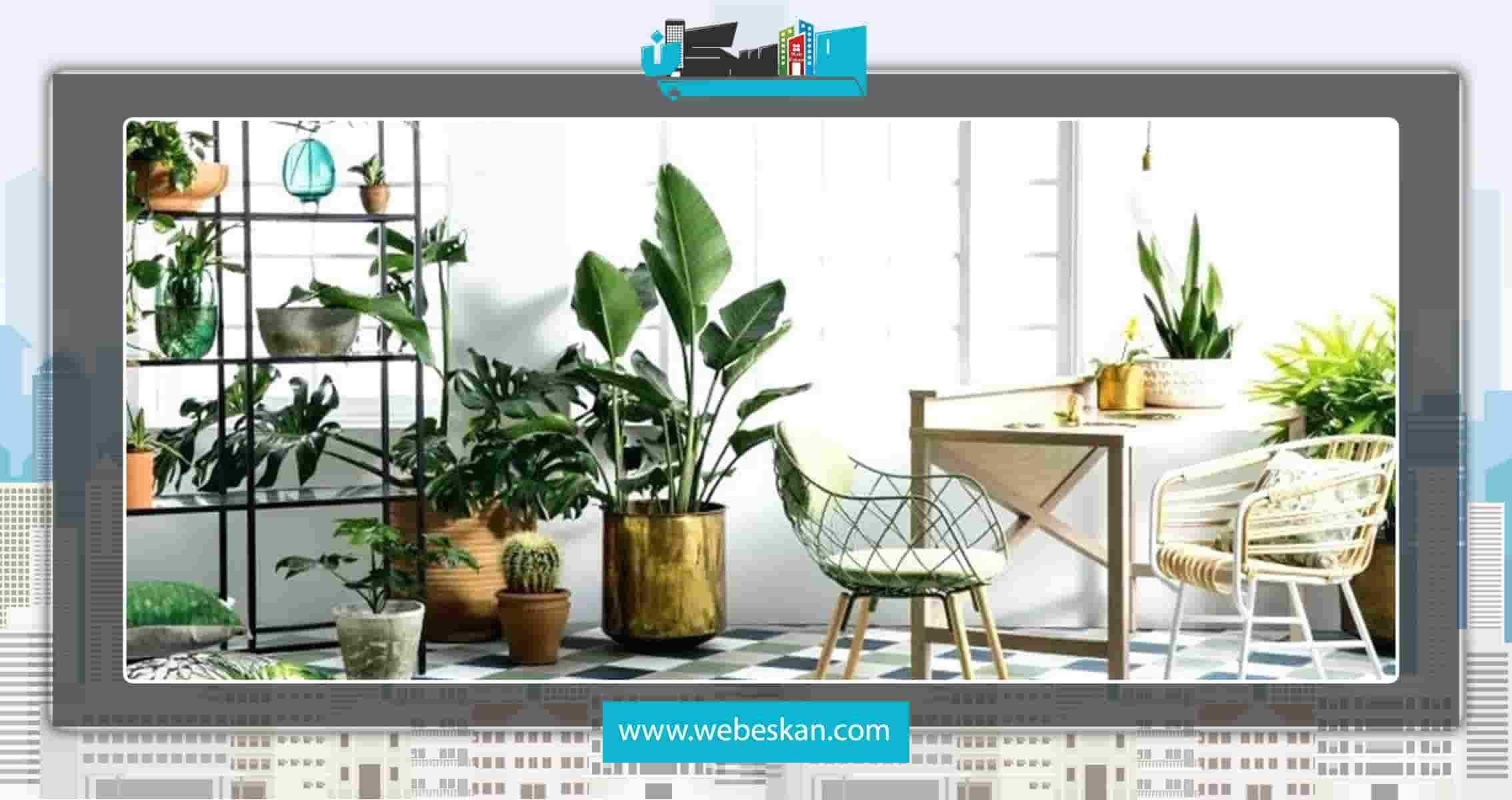 گیاهان آپارتمانی سایه دوست