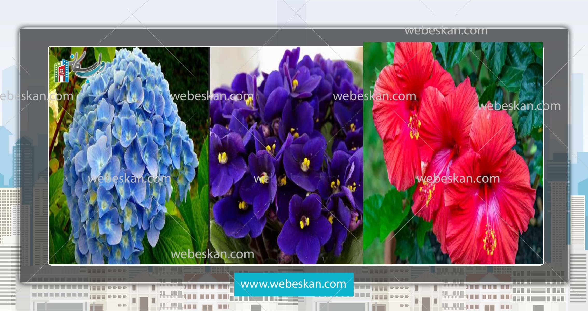 بهترین گیاهان برای بهار