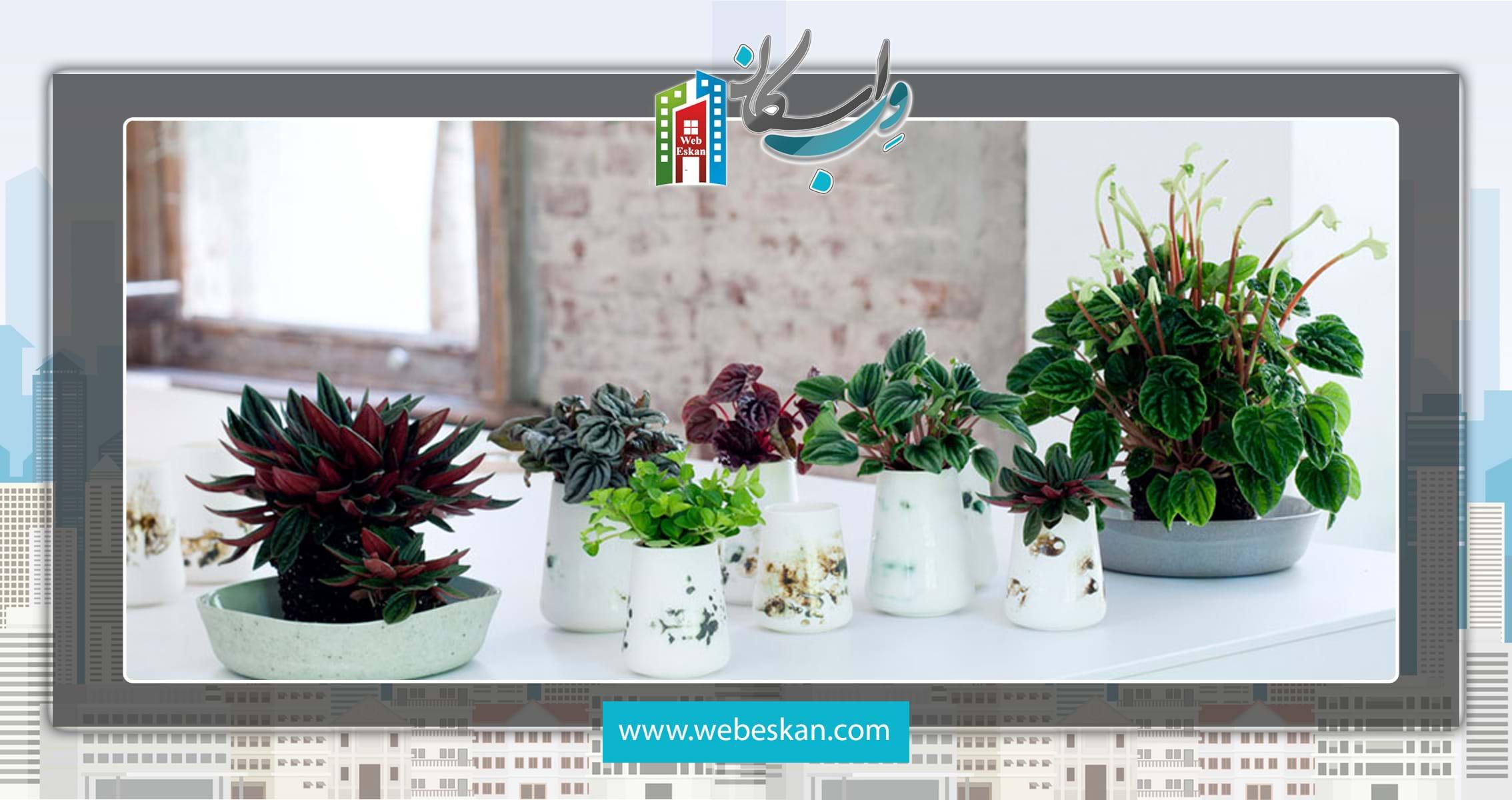 آشنایی با گیاهان آپارتمانی