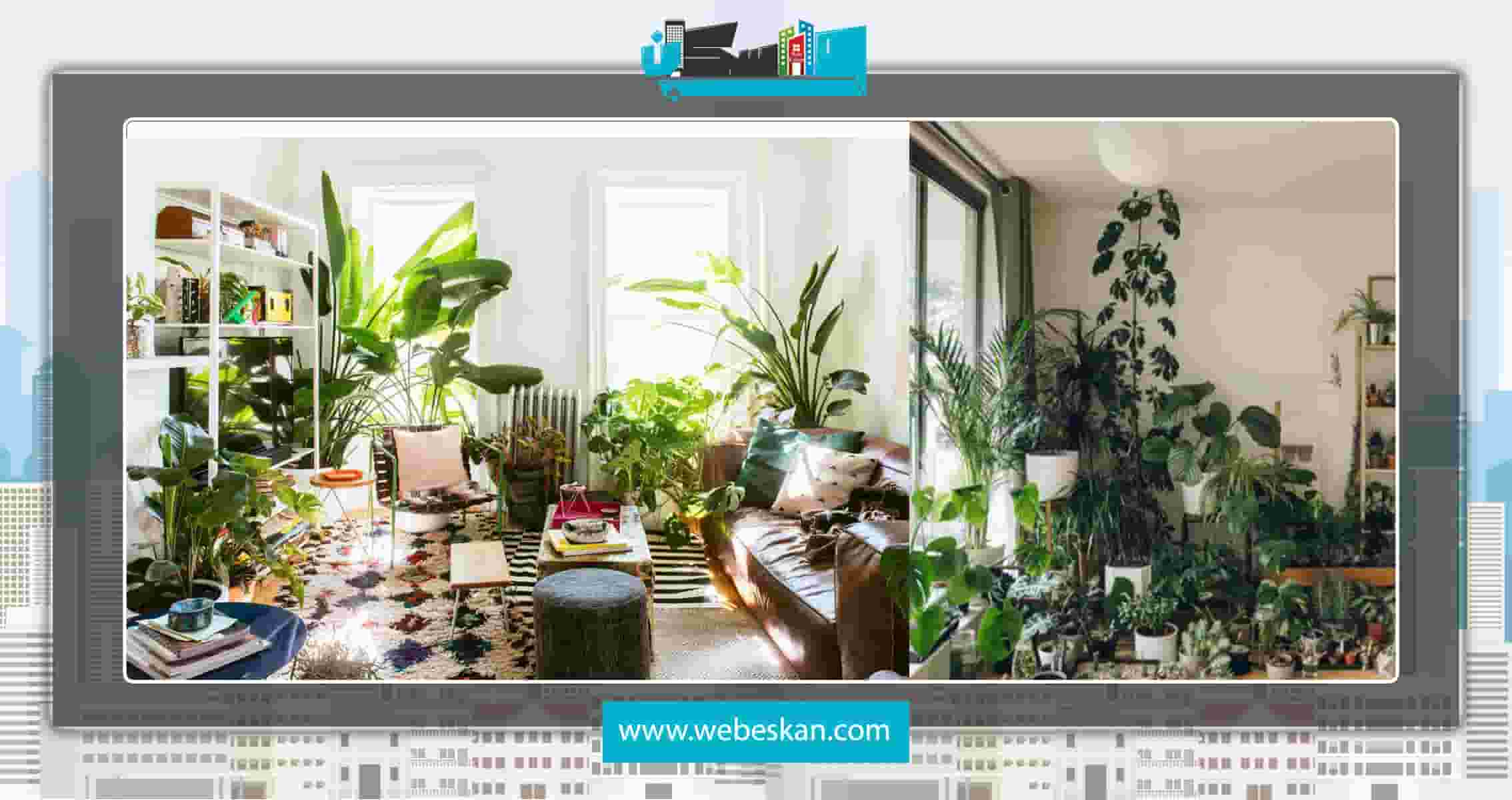 معرفی گلهای آپارتمانی