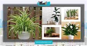 تصفیه هوای منزل با نگهداری از گیاهان آپارتمانی