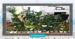 10 گیاه برتر برای ساکنان آپارتمان