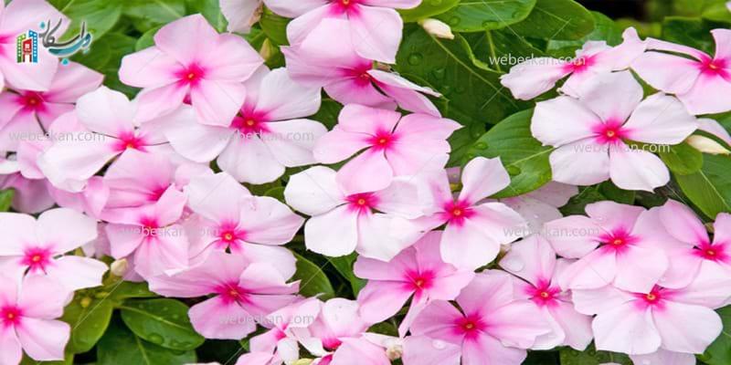 بهترین گیاهان برای بالکن